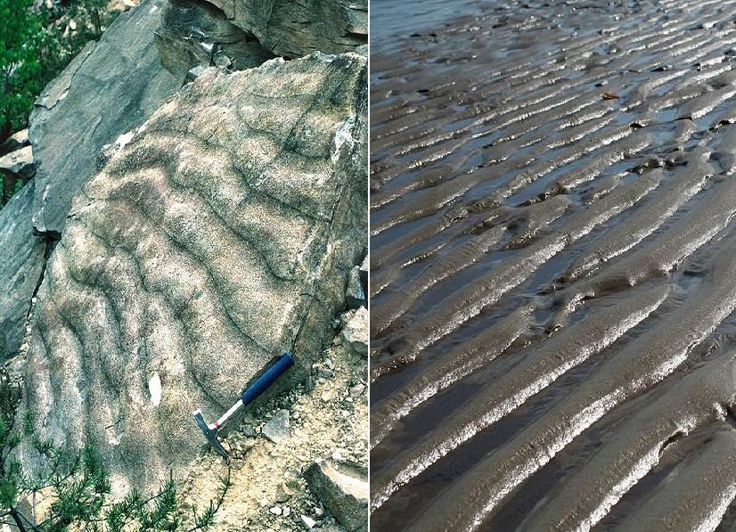 Aktualismus: Fossile und rezente Rippelmarken
