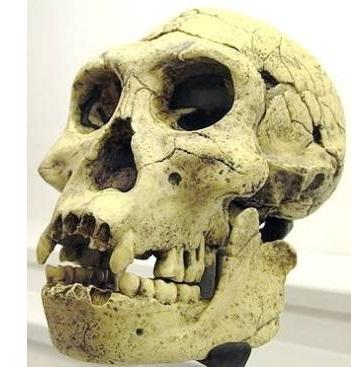 Dmanissi-Schädel aus Georgien