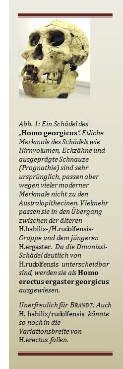 Schädel des Homo georgicus aus Dmanissi